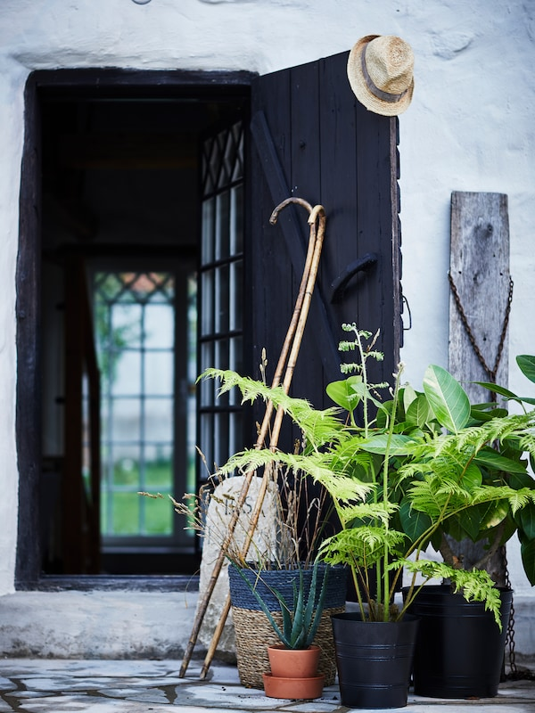 Two canes leaning against an open door, with medium sized potted plants beside and a hat hanging on the door's corner.