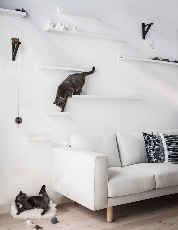Two cats play on DIY cat shelves made from IKEA MOSSLANDA picture ledges mounted at different heights above a sofa.