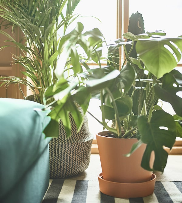 Two large, potted plants sit on the floor in front of a window.