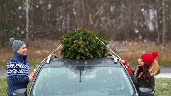 Two people tying a real Christmas tree to the top of their car, on a snowy day.