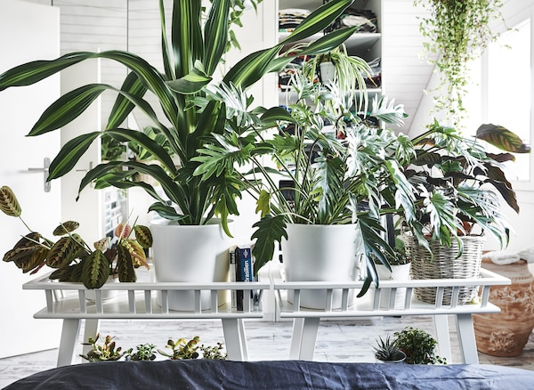 Two potting tables full of plants along the end of a bed.