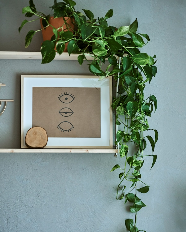 Two shelves on a grey wall, one shelf has a plant with trailing leafy stems, the other has a framed sketch of three eyes.