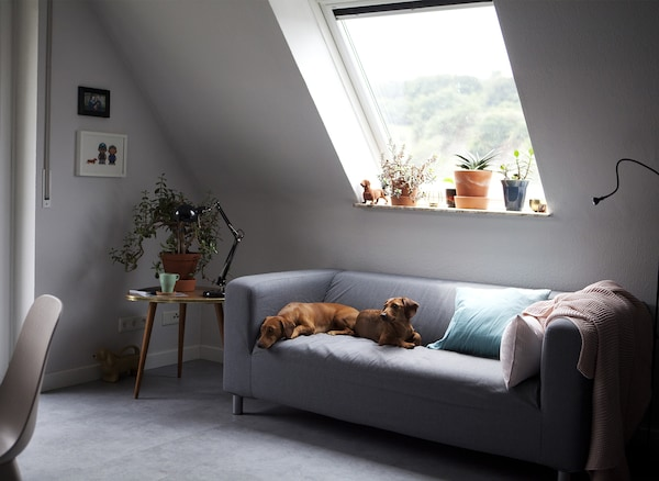 Two small dogs sitting on a pale grey sofa, and a side table with plants and a lamp.
