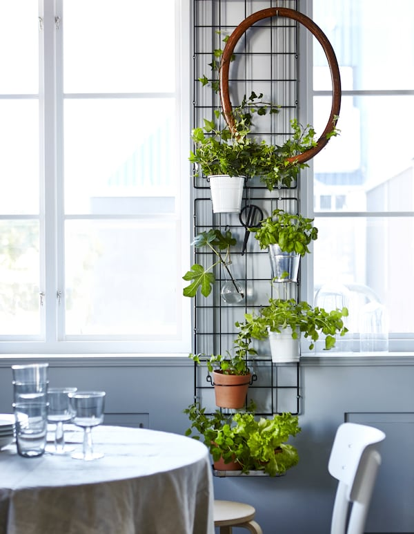 Two wire trellises are mounted between two windows and hold pottend plants and herbs, an oval frame and a pair of garden scissors.Two wire trellises are mounted between two windows and hold pottend plants and herbs, an oval frame and a pair of garden scissors.