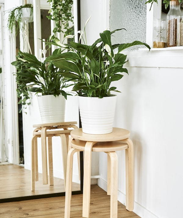 Two wooden stools stacked together topped with a large pot plant next to a mirror.