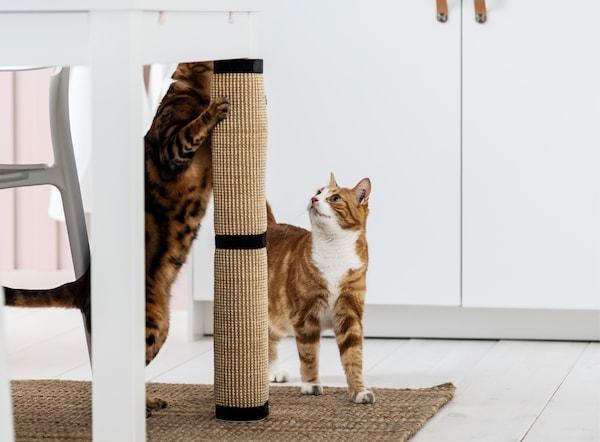 Um gato laranja a olhar para um gato malhado a usar um arranhador LURVIG, enrolado na perna de uma mesa.