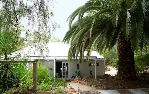Uma moradia de um piso no meio da floresta com uma palmeira gigante.