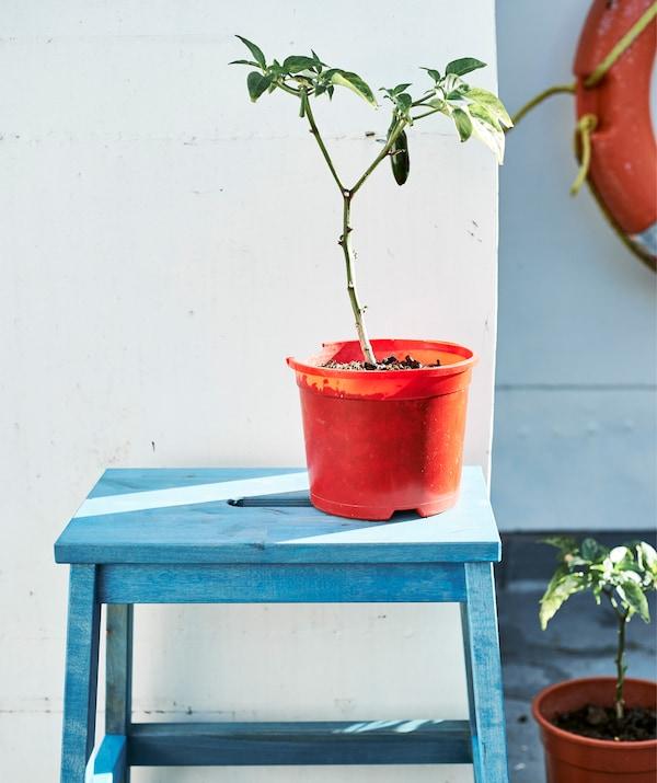 Uma planta num vaso em laranja, num banco pintado de azul.