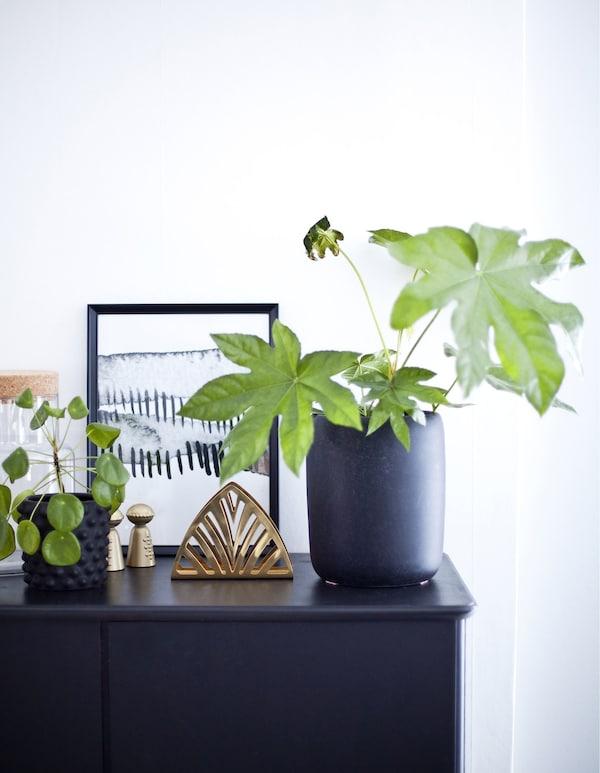 Un aparador gris oscuro delante de una pared blanca decorado con plantas y objetos.