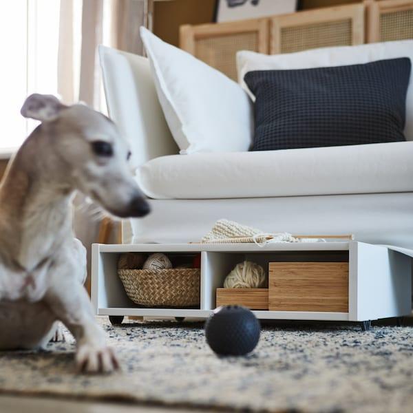 Un cane seduto su un tappeto accanto a un divano bianco con contenitore FREDVANG pieno di scatole in legno e rattan.