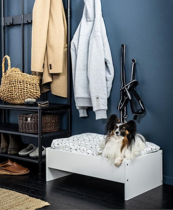 Un chien dans un lit blanc pour animaux de compagnie placé à côté d'une étagère à chaussures dans un corridor.