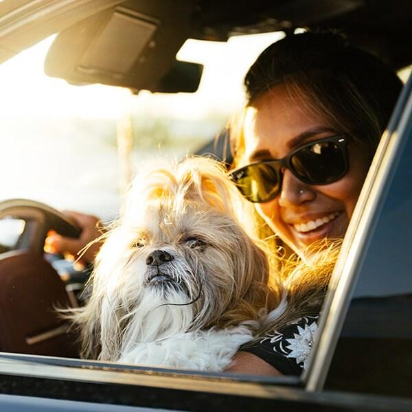 Un chien shih tzu blanc regarde par la fenêtre et voit son maître qui porte des lunettes soleil. Derrière lui, il y a un brillant coucher de soleil.