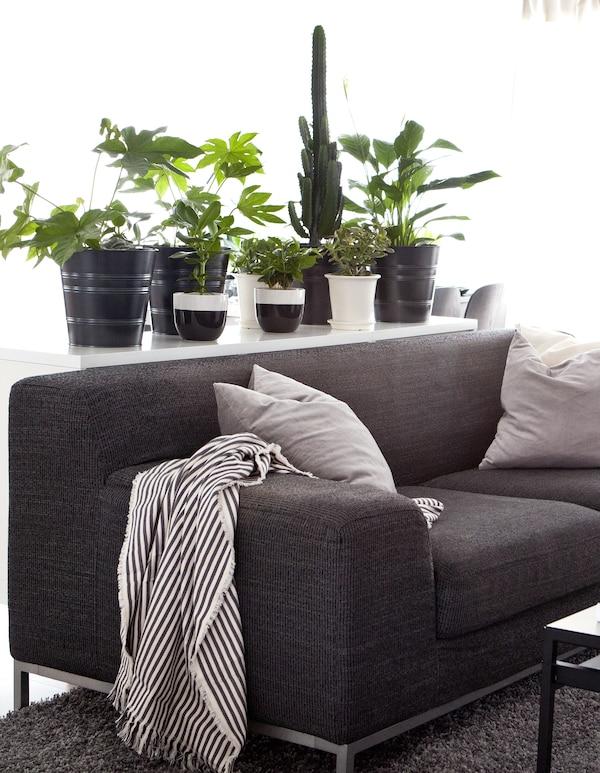 Un divano grigio scuro con dei cuscini e una coperta a righe davanti a un buffet decorato con vasi di piante - IKEA