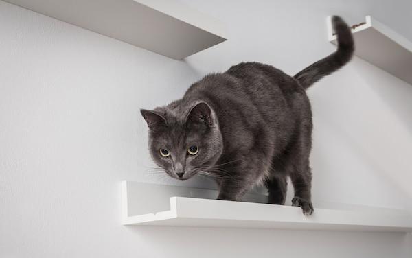 Un gato gris oscuro camina por un marco para cuadros MOSSLANDA montado en una pared blanca de un salón.