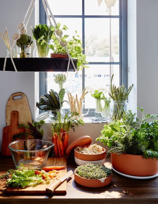 Un grand nombre de légumes et d'herbes rangés dans des vases et des bocaux, sur un rebord de fenêtre, avec en avant-plan, des carottes sur une planche à découper.