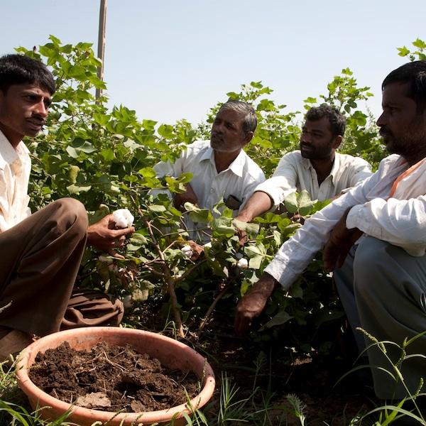 Un gruppo di coltivatori parlano ed esaminano le fibre di cotone – IKEA
