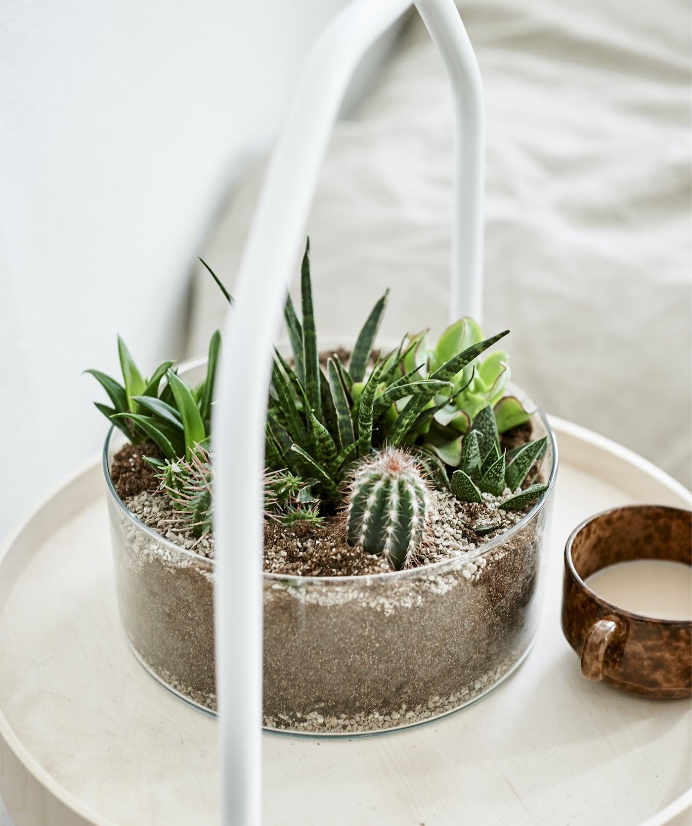 Renueva tu hogar con plantas domésticas IKEA