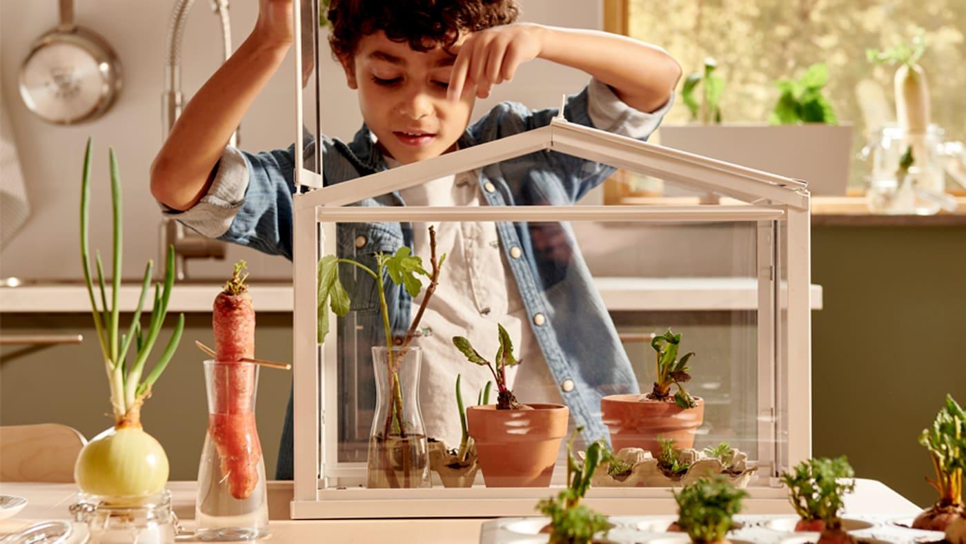 Un jeune garçon soulève le couvercle d'une serre posée sur une table; des carottes et des oignons poussent dans des vases et dans un moule à muffins.
