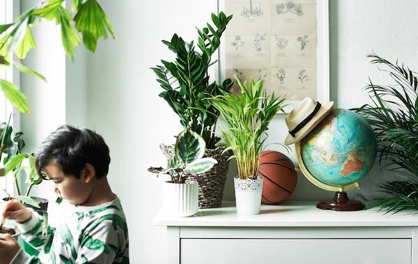 Un niño cuida plantas en macetas de una habitación, con plantas en el alféizar y la vitrina blanca.