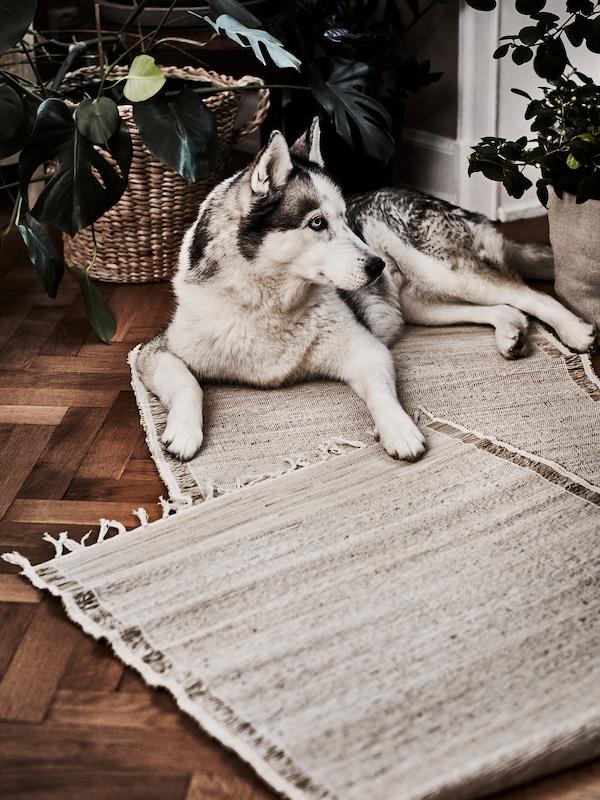 Un perro grande descansa feliz junto a unas plantas sobre un par de alfombras planas de fibra de banano natural.