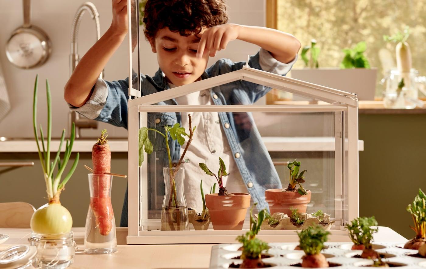Un petit garçon en train d'arroser de jeunes plantes dans une serre SOCKER. À côté, sur la table, différents légumes sont placés dans de l'eau ou du terreau.