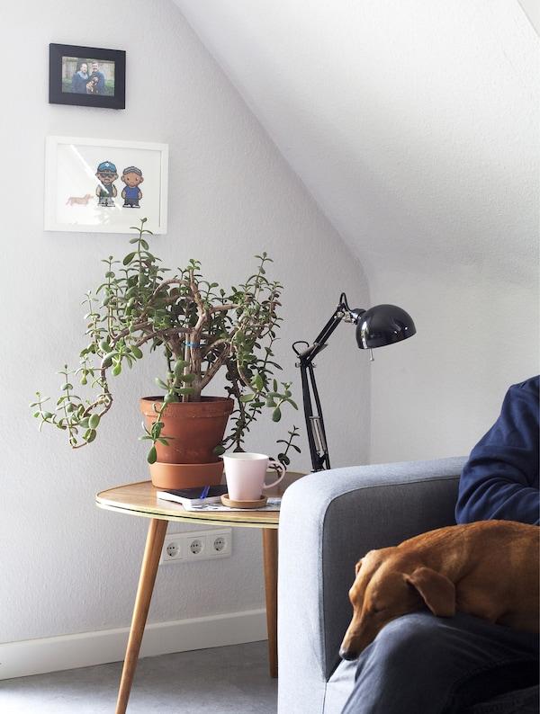 Un tavolino vintage, una lampada nera, una pianta e un cagnolino che dorme sulle gambe del suo padrone seduto su un divano grigio – IKEA