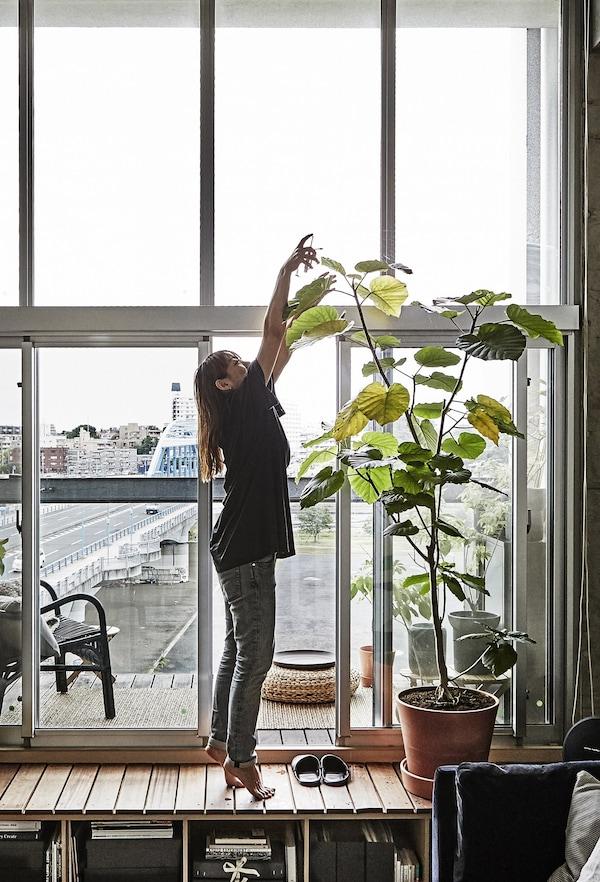 Una dona rega una planta alta davant d'una finestra.