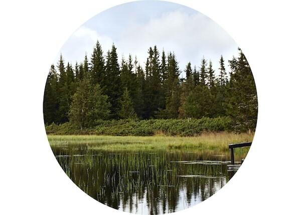 Una foresta che si riflette in un lago di montagna.