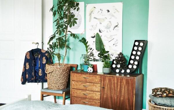 Una silla y un armario de madera sostienen plantas en macetas de diferentes tamaños, en un dormitorio con una pared de color verde claro.