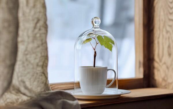 Une cloche en verre MORGONTIDIG recouvre une tasse où pousse une petite plante, posée sur un rebord de fenêtre étroit, avec un paysage hivernal à l'arrière-plan.