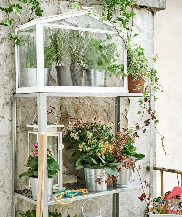 Une étagère en métal contre un vieux mur, avec des fleurs dans des cache-pots en acier, une grande lanterne blanche et une miniserre avec des herbes aromatiques.