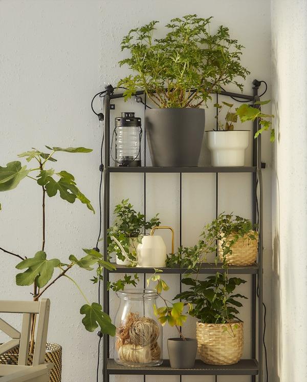 Une étagère grise avec une lanterne, un bocal en verre, un arrosoir blanc et différents pots de plantes vertes.