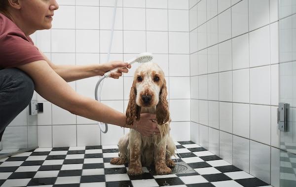 Une personne en train de laver un chien dans la douche.