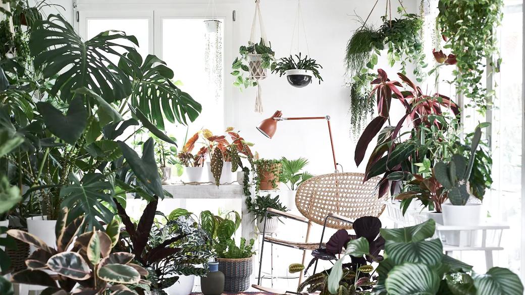 Une pièce pleine de plantes, une lampe de bureau, un rocking chair et un Kilim.