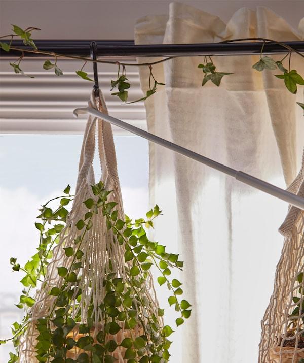 Une plante suspendue à une tringle à rideau est tirée sur le côté à l'aide d'une tirette, pour adapter la luminosité.