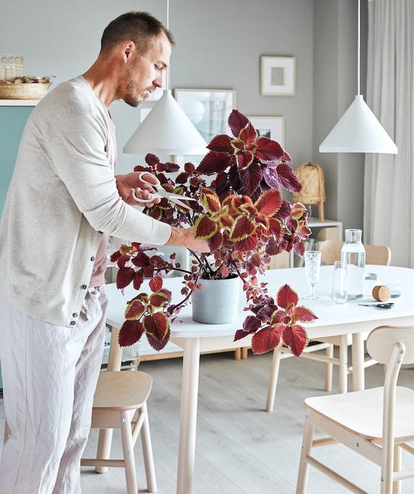 Une salle de séjour avec une table, des chaises et une bibliothèque. Un homme coupe les tiges d'une plante luxuriante avec des ciseaux.