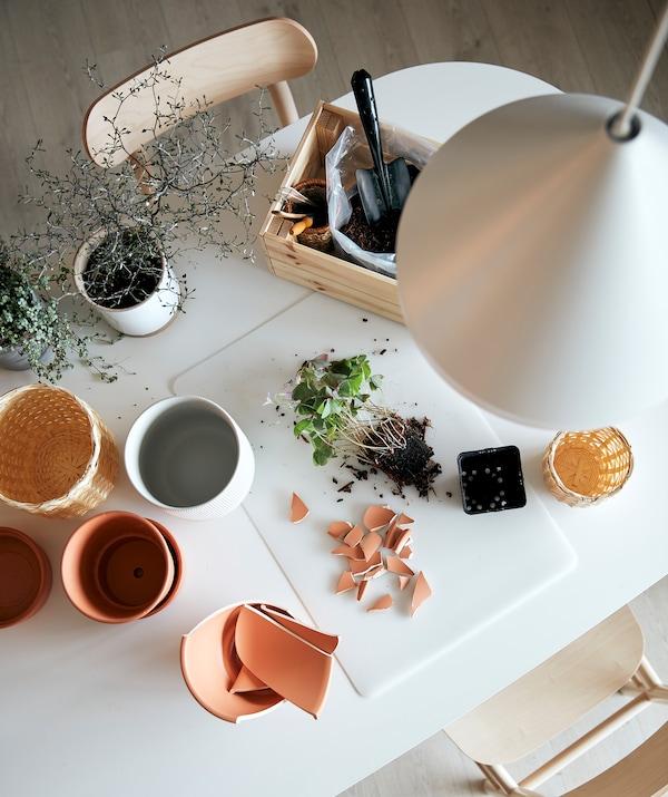 Une station de jardinage sur une table de cuisine. Sur un sous-main SKVALLRA sont disposés une plante dépotée avec la terre autour des racines et des éclats de pots.