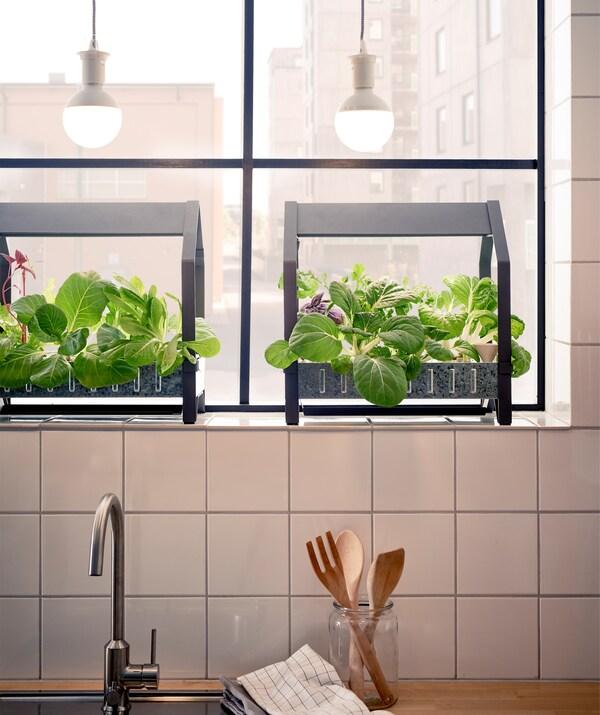 Unità per coltivazione con verdure sul davanzale sopra al lavello della cucina, illuminate da lampade da soffitto - IKEA