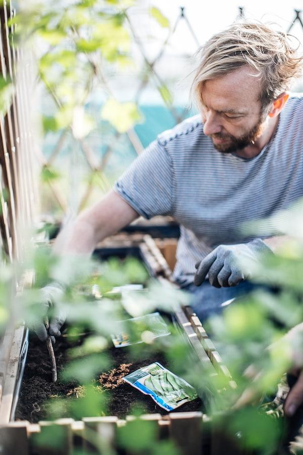 Urban garden enthusiast Will  planting seeds in ASKHOLMEN box.