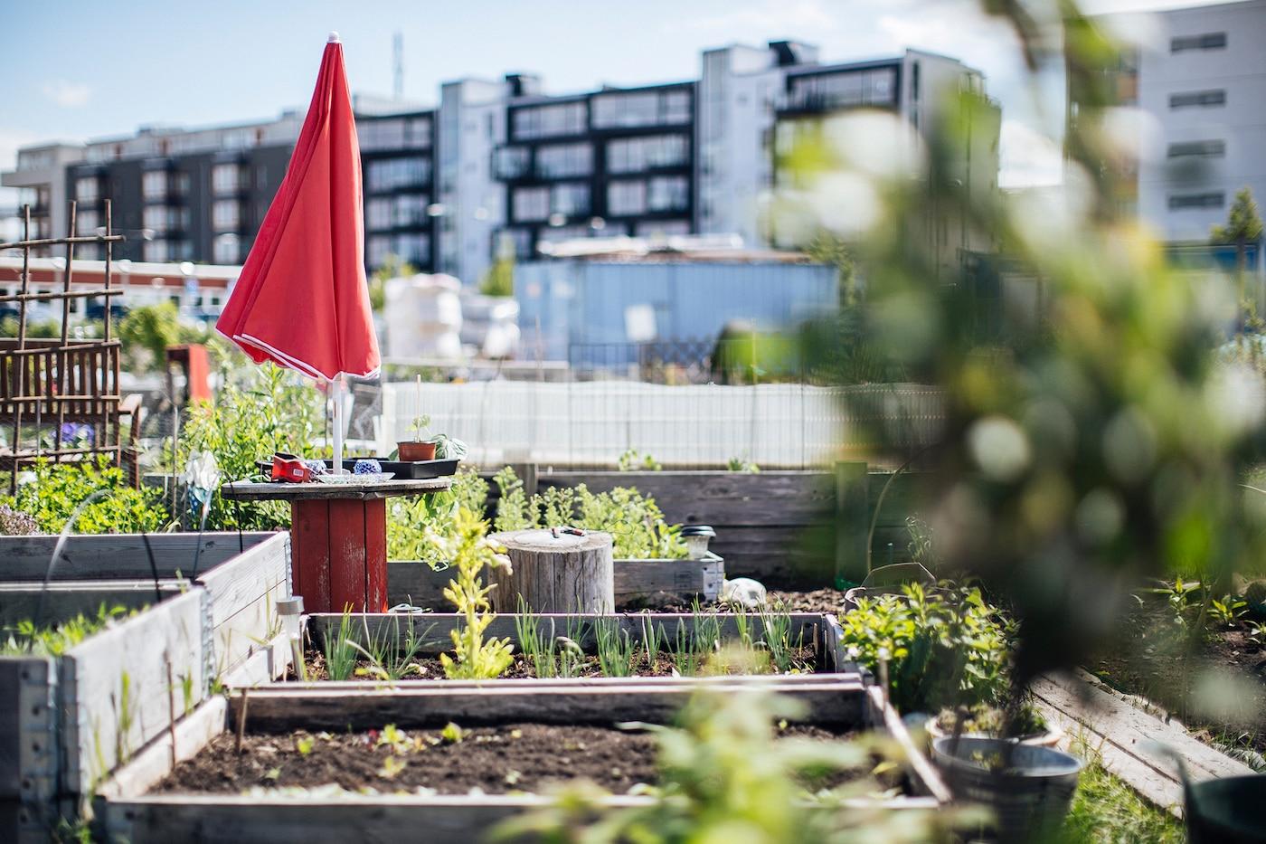 Urban Gardening: Mehrere Gartenbeete in einer Großstadt mit Kräutern, Blumen & Pflanzen.