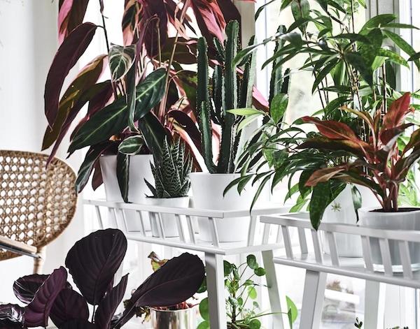 Valkoinen kukkapöytä tai kukkahylly sopii useimpiin sisustuksiin ja saa vihreät huonekasvit loistamaan.