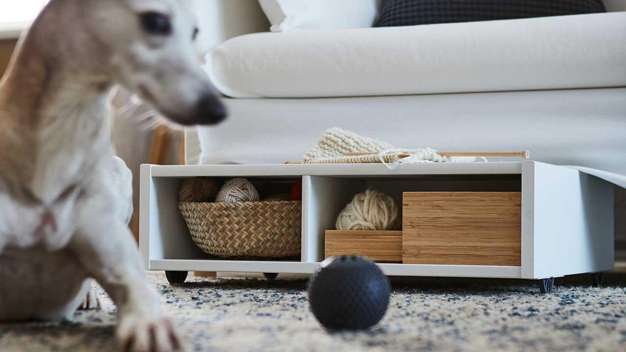 Valkoinen pyörällinen vuodevaatelaatikko/yöpöytä sohvan alla. Koira leikkii pallon kanssa matolla.