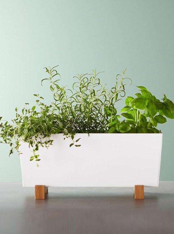 Vaso bianco con piante vere