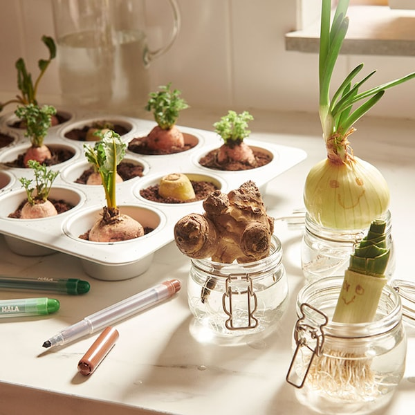 Vegetables planted in muffin tins and small mason jars, with smiley faces drawn on some of the vegetables.
