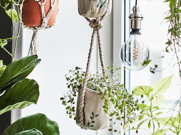 Verschiedene Pflanzen in handgearbeiteten Ampeln mit aufgestickten Details hängen vor einem Fenster und sorgen so für einen kleinen Urwald mitten in der Stadt.