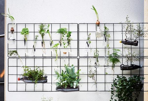Verticaal tuinieren - klimplantrek met reageerbuisjes, lege flessen en vazen gevuld met planten