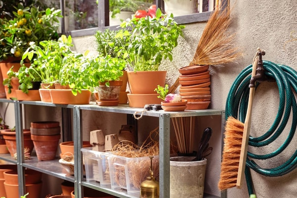 VIele Pflanzen und Tontöpfe auf einem grauen Regal im Freien