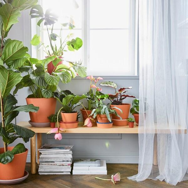 Voeg planten in jouw woonkamer