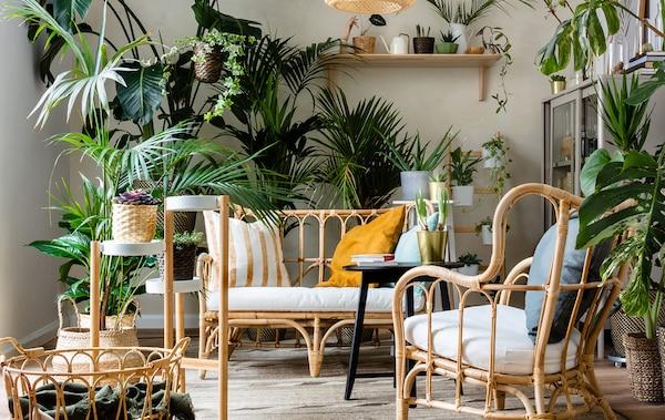 Voor de groene vingers: een huis met rotan zetels, een rotan mand, een plantenstandaard en heel veel kamerplanten voor groene vingers.