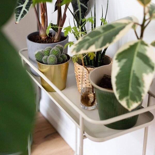 voor groene vingers: bloempotten met planten op een plantenstandaard.